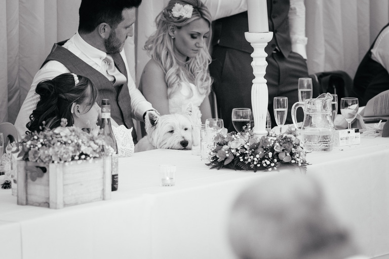 dog sitting at the top table wedding
