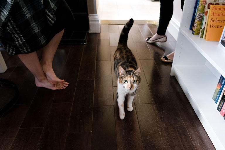 couple's cat at home