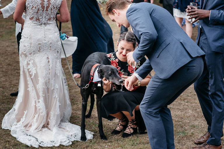 guests play with the couple's dog