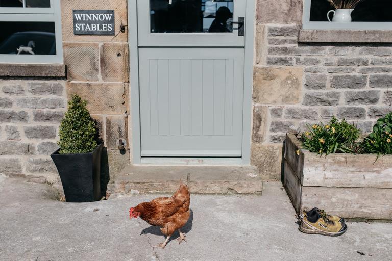 chicken outside bridal prep