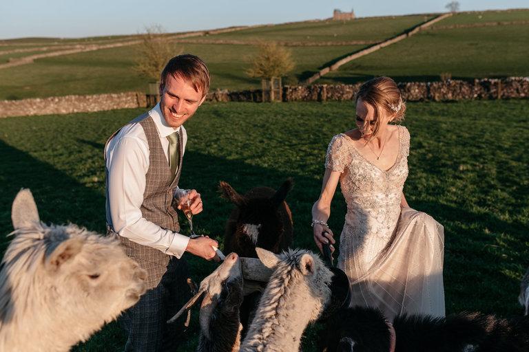 bride and groom feeding the animals