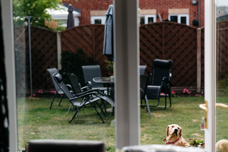 labradour dog in parents garden