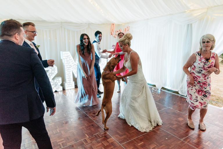 bride dancing with her dog