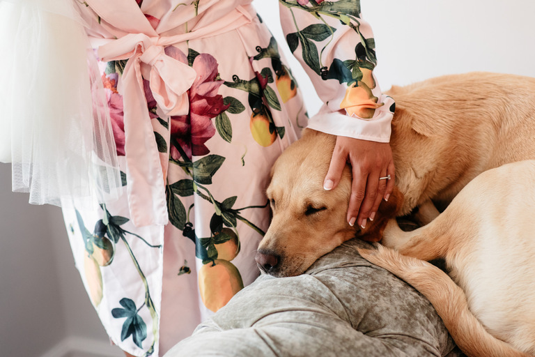 bride patting her dog